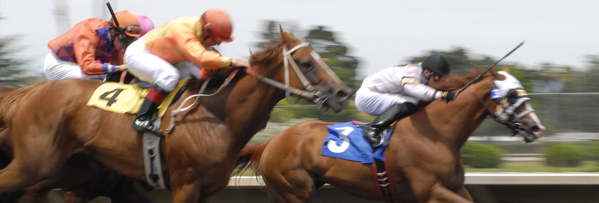 LIVE SATELLITE HORSE RACING & BETTING, ALL YEAR LONG